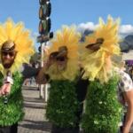 Fan Cam: Sunflowers